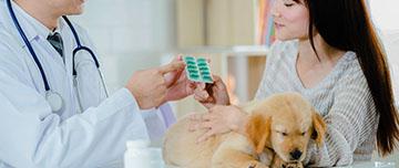 Prescription vétérinaire
