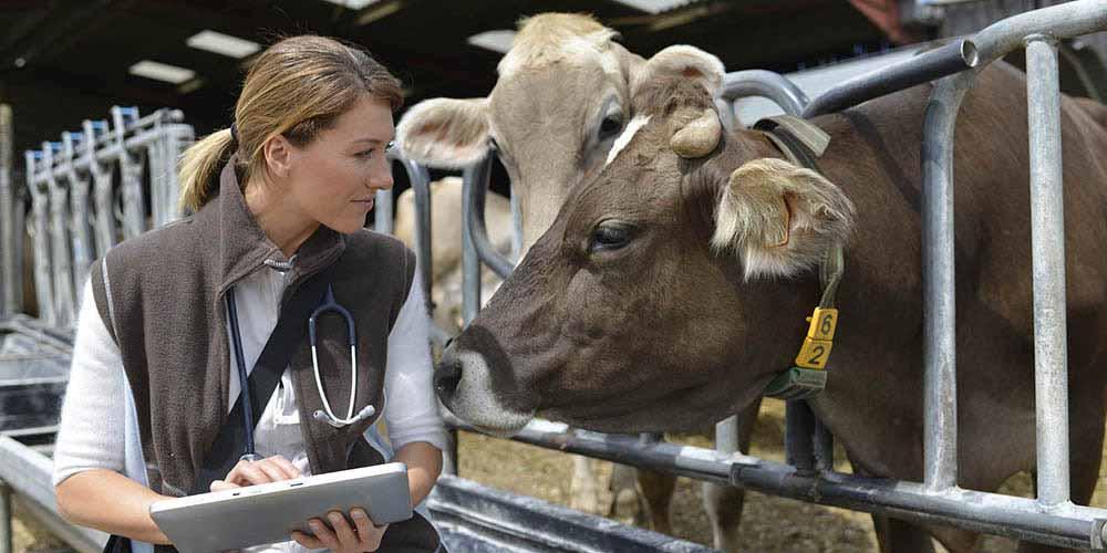 Le vétérinaire et sa responsabilité civile professionnelle