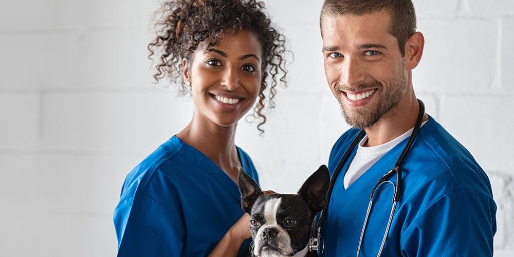 Obligation des vétérinaires dans le contrat de soins