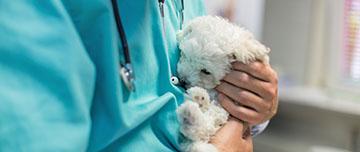 Vétérinaire mis en cause en RCP
