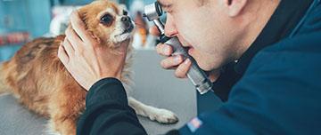 Vétérinaire : responsable et assuré
